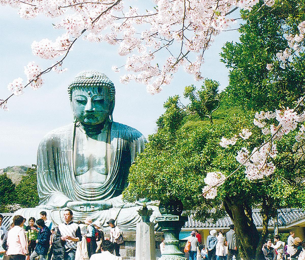 写真・映像で伝える桜の魅力