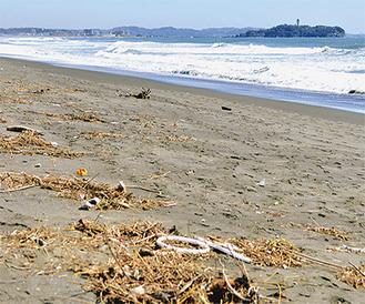 茅ヶ崎でも木屑に混じり人工ゴミが