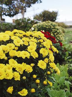 黄、赤、白色の花が咲く(10月25日撮影)