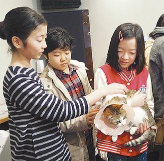 保護猫と触れ合う児童たち