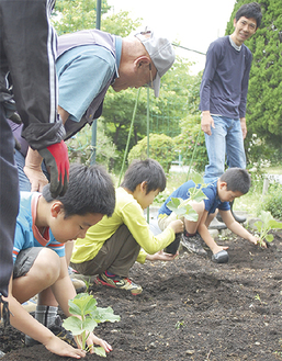 児童が丁寧に苗を植えた