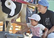 園児が乳搾り体験