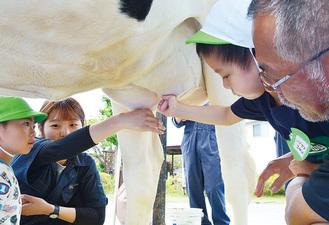 大きな牛にワクワク・ドキドキの乳搾り