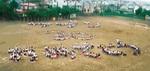 約300人が参加した2008年の人文字