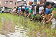 全校児童の米作り