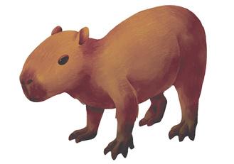 ネズミ目テンジクネズミ科の齧歯類。草食で、成体は体長1mを超える。
