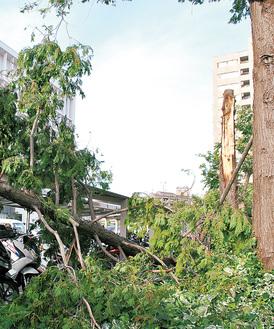市役所裏のバイク置き場南側では樹木が裂けて倒木(9月10日撮影)