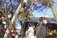 松籟庵に春の気配