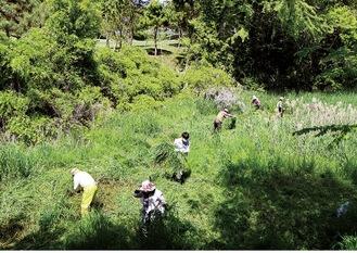 草を刈り湿地の水の流れを確保(3番ホール横にて)