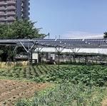 ◀農地の上に間隔を置いて並ぶ太陽光発電用パネルは、NPO法人「ちがさき自然エネルギーネットワーク」の協力のもと設置した