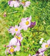 深まる秋に花の便り