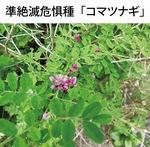 マメ科の落葉小低木で高さは1m以下。7〜8月に紅紫の花を穂状に付ける。