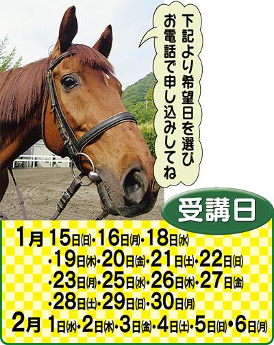 本物の馬に乗ってみよう!