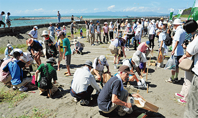 海浜植物の里親募集開始