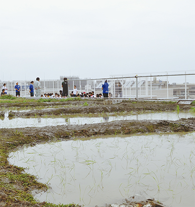 最も空に近い水耕栽培