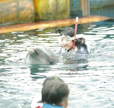 イルカとの交流楽しむ