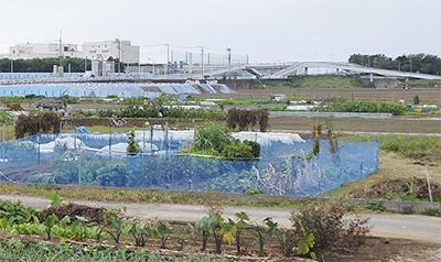 柳島向河原を選定