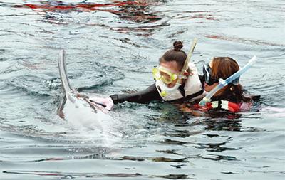 イルカと触れ合い体験