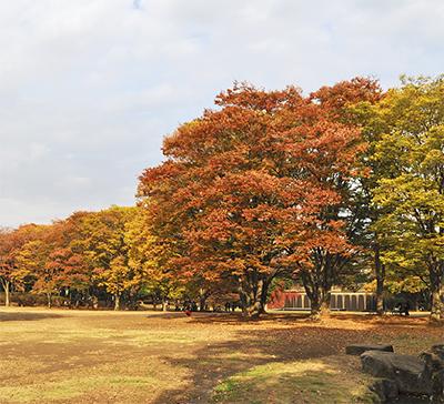 木々が色鮮やかに