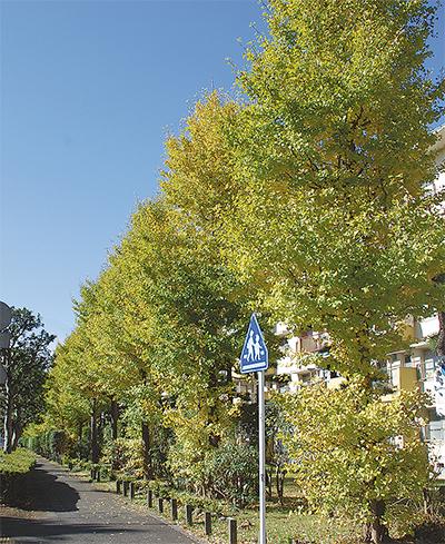 秋空に黄金色の輝き