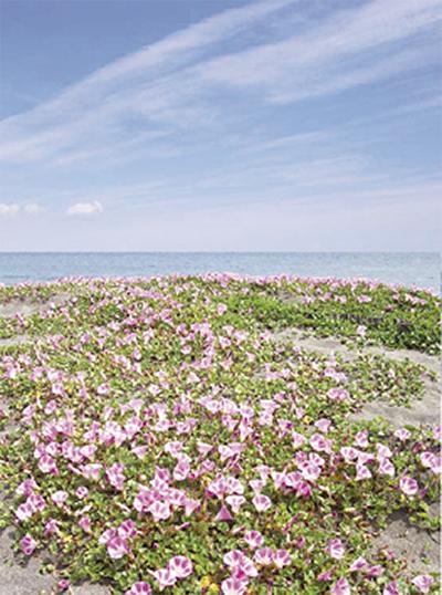 海岸のいきものを紹介