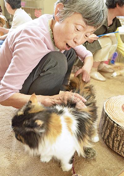猫カフェを高齢者が訪問