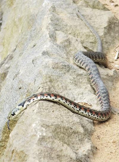 「ヘビにいたずらしないで」