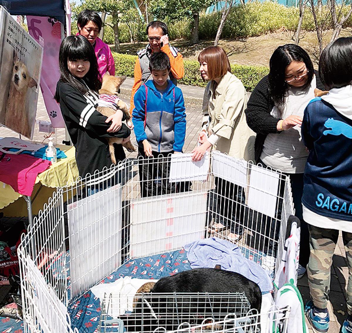 保護犬譲渡会イベント
