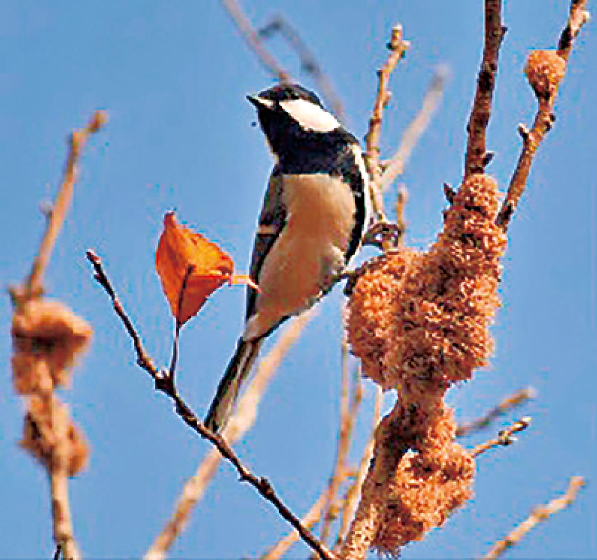 冬鳥の観察を楽しむ