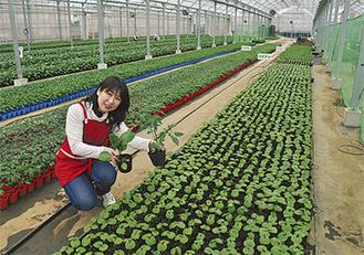 順調に生育が進む野菜苗