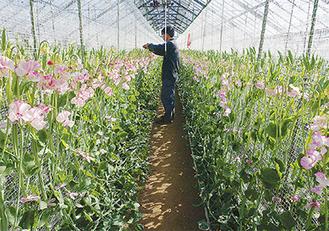 寒暖のバランスがよくなってきたという英晃農園