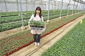 野菜苗の緑の葉でいっぱいのビニールハウス