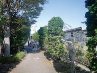 寒川駅周辺で樹木剪定