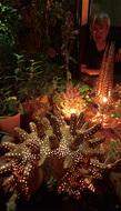 生えてる夜の観葉植物