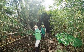 竹藪を切り開き、現在の河岸を目指す