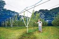 いつかロボで梨を穫る