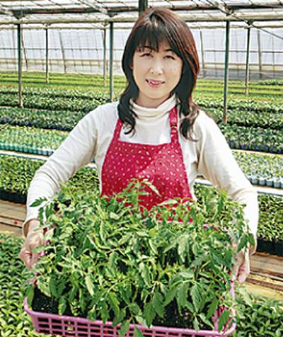 野菜の苗生育順調
