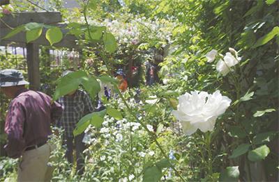 バラ庭園盛況