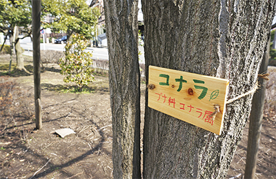 小中学生が樹名板設置