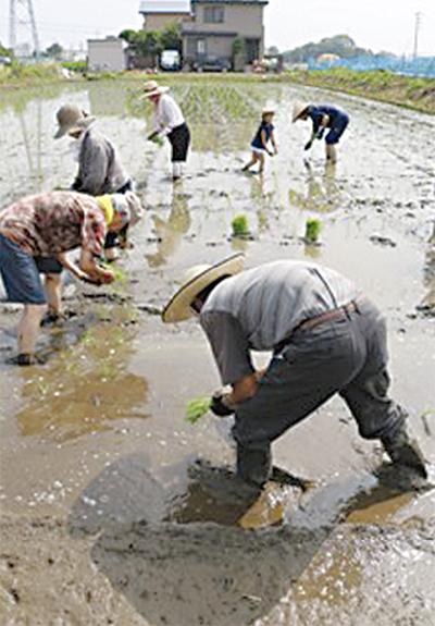 自然農法田植え参加募集