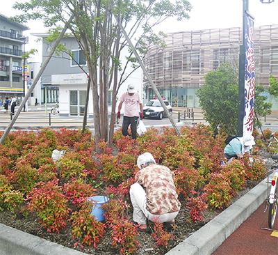 寒川駅周辺で樹木再生