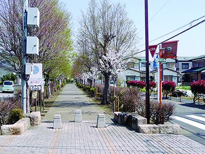 「寒川町に桜並木を」