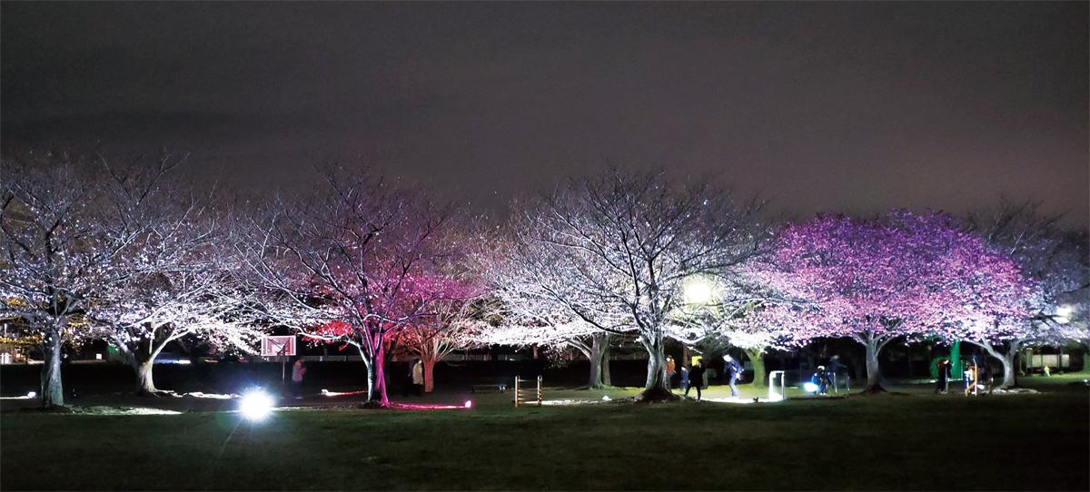幻想的な春の夜