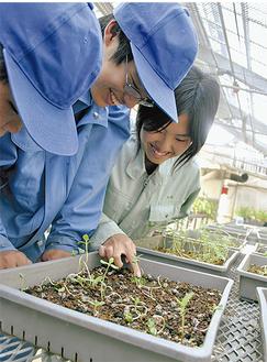カプセルから芽を出したヒマワリを見つめる生徒「改良の余地はまだまだある」と意欲的だ