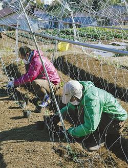同学園の農場で作業する利用者