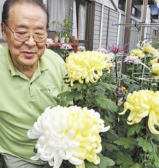 3本仕立ての菊のなかで1輪が白と黄色の2色で咲いた花と、栽培者の松木さん(10月25日撮影)