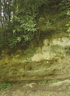 箱根山の火山灰が縞模様状に積もった地層(土屋で撮影)
