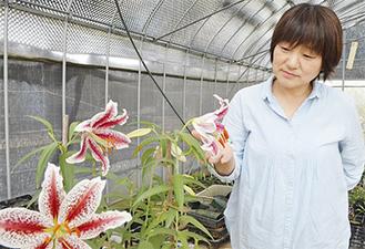 開花したベニスジヤマユリを見つめる窪田さん