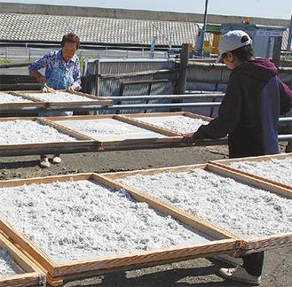 18日、佳栄丸で水揚げしたシラスの加工作業