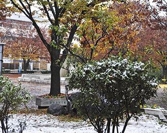 こんもりと積もった初雪=24日午前、市博物館前広場で